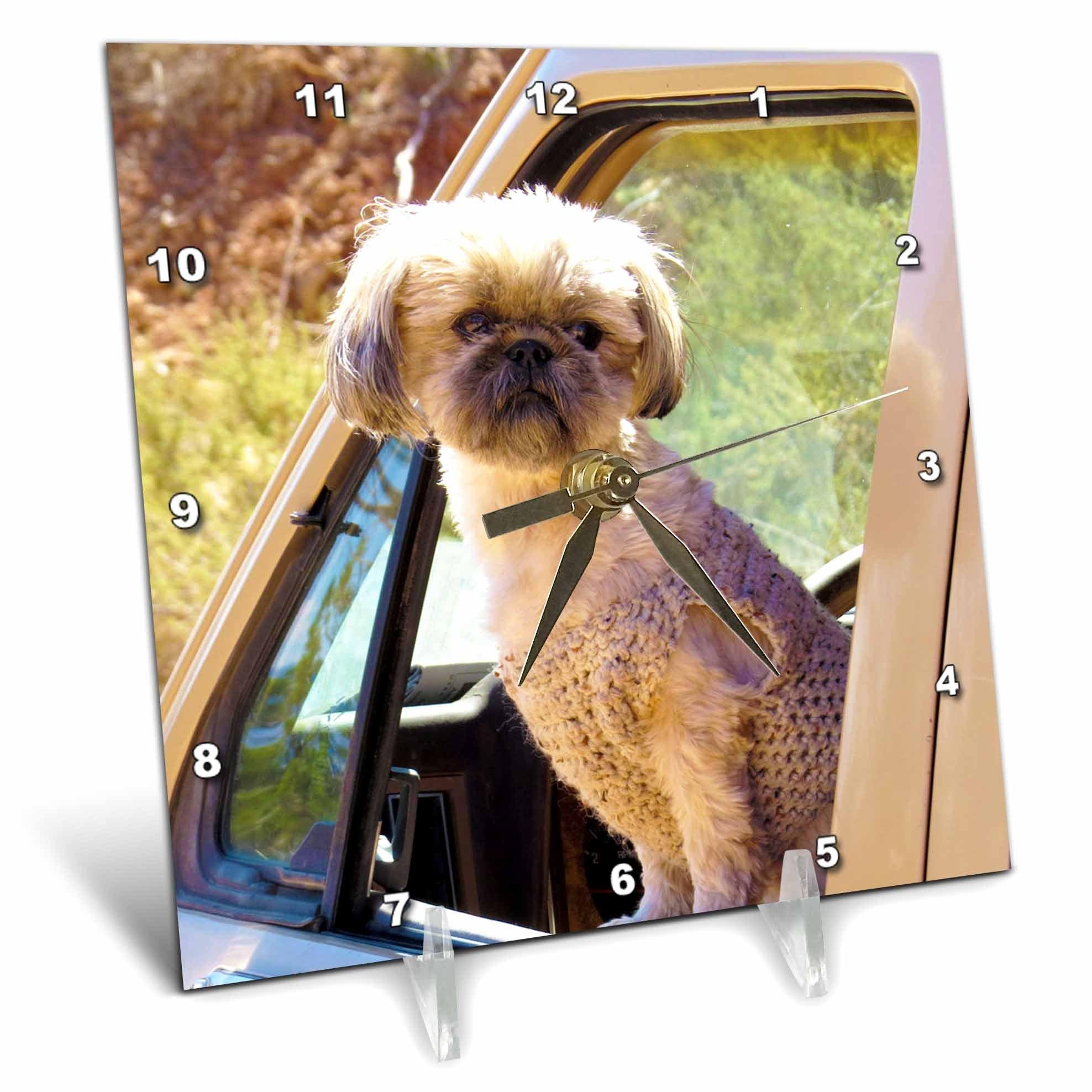 3dRose Jos Fauxtographee- Sweater Wearing Pup - A sweet sweater wearing Shi Tzu Pup looking out the Bronco Window - 6x6 Desk Clock (dc_263364_1)