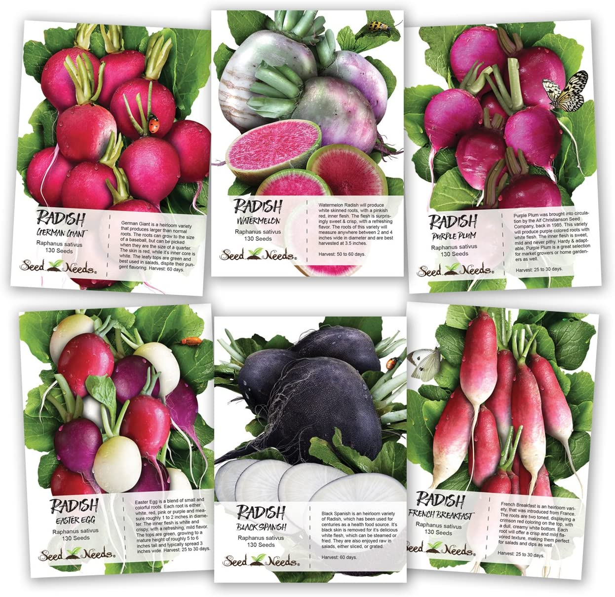 Seed Needs, Multicolor Radish Seed Packet Collection (6 Individual Packets) Non-GMO Seeds