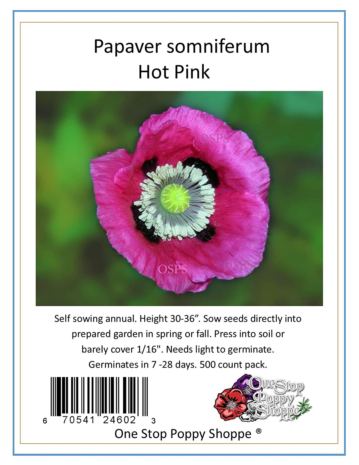 Amazon 500 Poppy Flower Seeds Papaver Somniferum Hot Pink