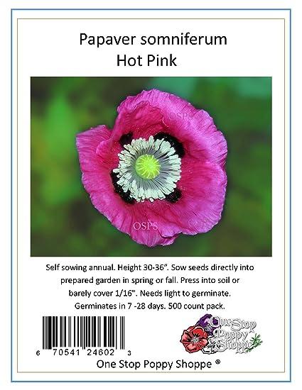 Amazon 500 poppy flower seeds papaver somniferum hot pink 500 poppy flower seeds papaver somniferum hot pink poppies one stop poppy shoppe mightylinksfo