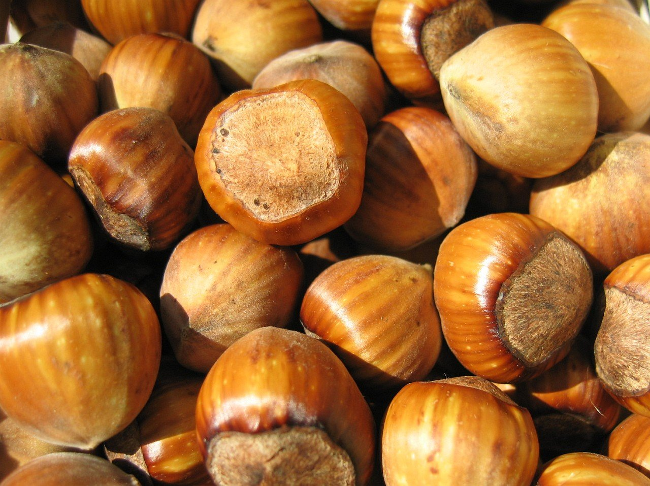 In Shell Filberts (Hazelnuts) - 5 lb. by Treasured Harvest