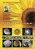 American Educational Fibonacci Sequence Poster