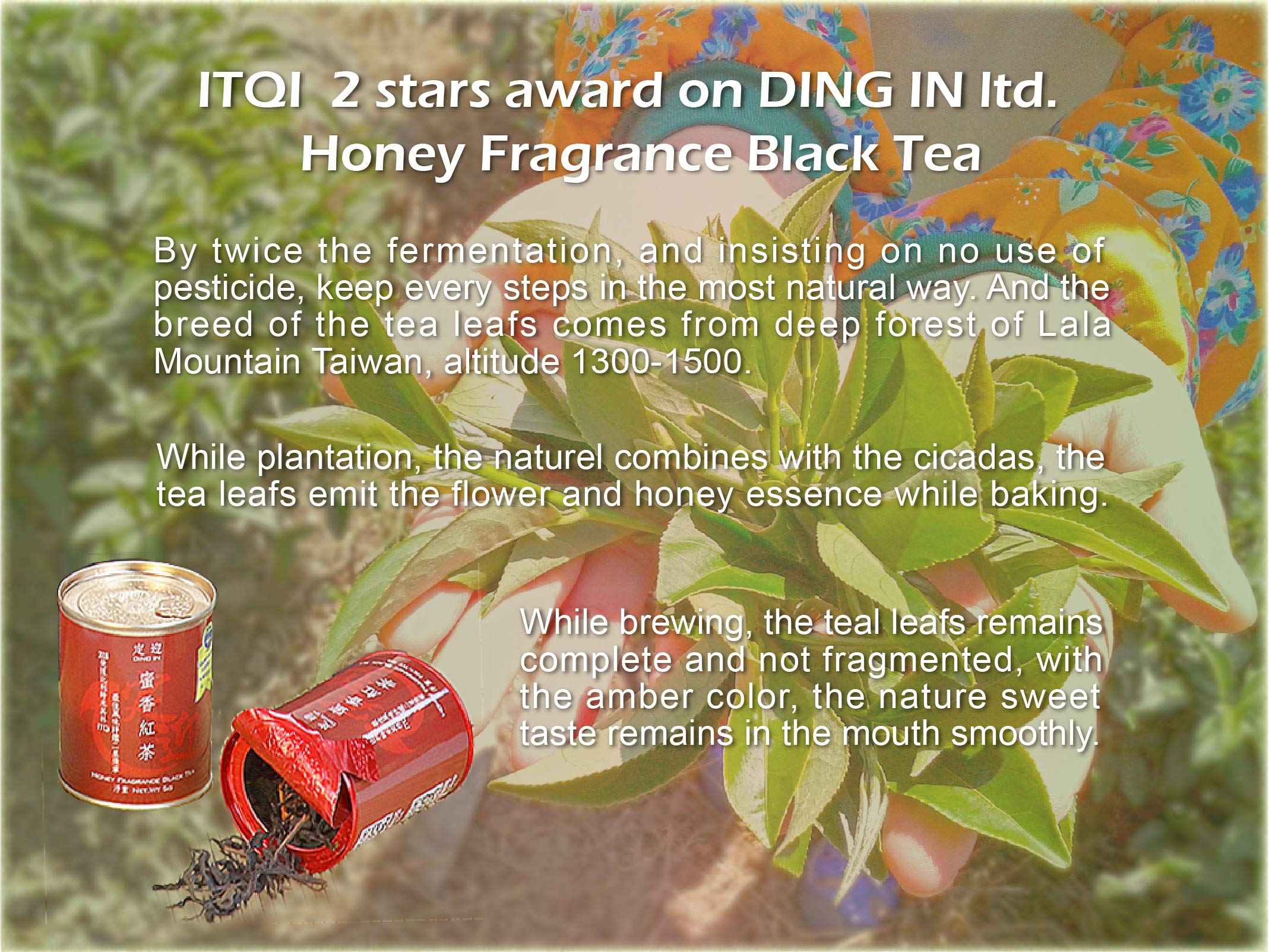 DING IN Honey Fragrance Black Tea Black Box 5g12can/box by Ding In ltd. (Image #3)