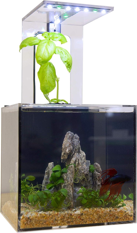 EcoQube C self cleaning aquarium