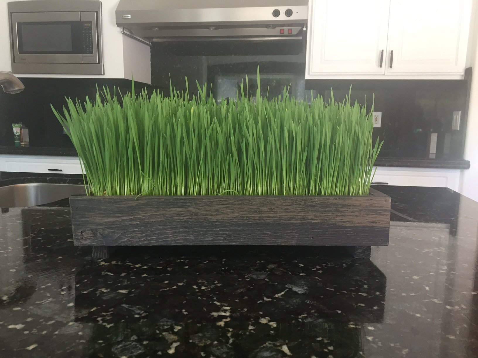 Complete Organic Wheatgrass kit with Cedar Planter, Organic Soil, Seeds and Instructions (Wicker Brown)