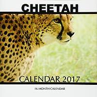 Cheetah Calendar 2017: 16 Month Calendar