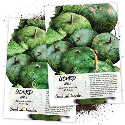 Seed Needs, Apple Gourd (Lagenaria siceraria) Twin Pack of 45 Seeds Each Non-GMO : Garden & Outdoor