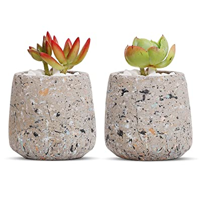T4U Cement Succulent Pot, Concrete Planter Cactus Plant Herb Container for Gardening Home and Office Decoration Birthday Wedding Gift, Set of 2 : Garden & Outdoor
