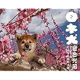 2019カレンダー 日本犬 ([カレンダー])