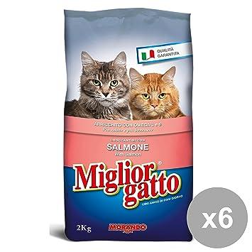 Miglior Gatto Mejor Gato Juego 6 2 kg.Seco Salmón Comida para Gatos: Amazon.es: Productos para mascotas