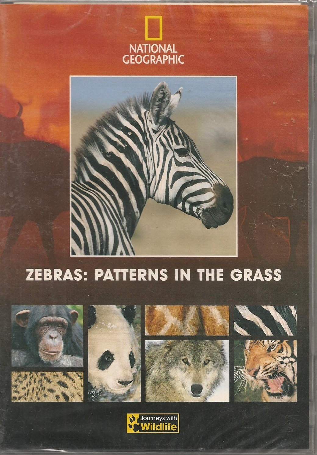 national geographic zebras patterns in the grass amazon co uk