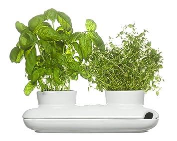 Sagaform Pot A Herbes Aromatiques Duo Amazon Fr Cuisine Maison