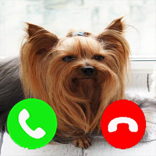 Amazon Com Yorkie Fake Call Prank Funny Pet Calling Prank Gag Fake Call From Yorkshire Terrier Dog Fake Call Simulator Appstore For Android