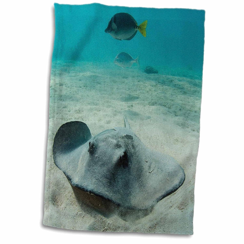 15 x 22 3D Rose Diamond Stingray-Dasyatis Brevis-Galapagos Islands-Ecuador Hand Towel Multicolor