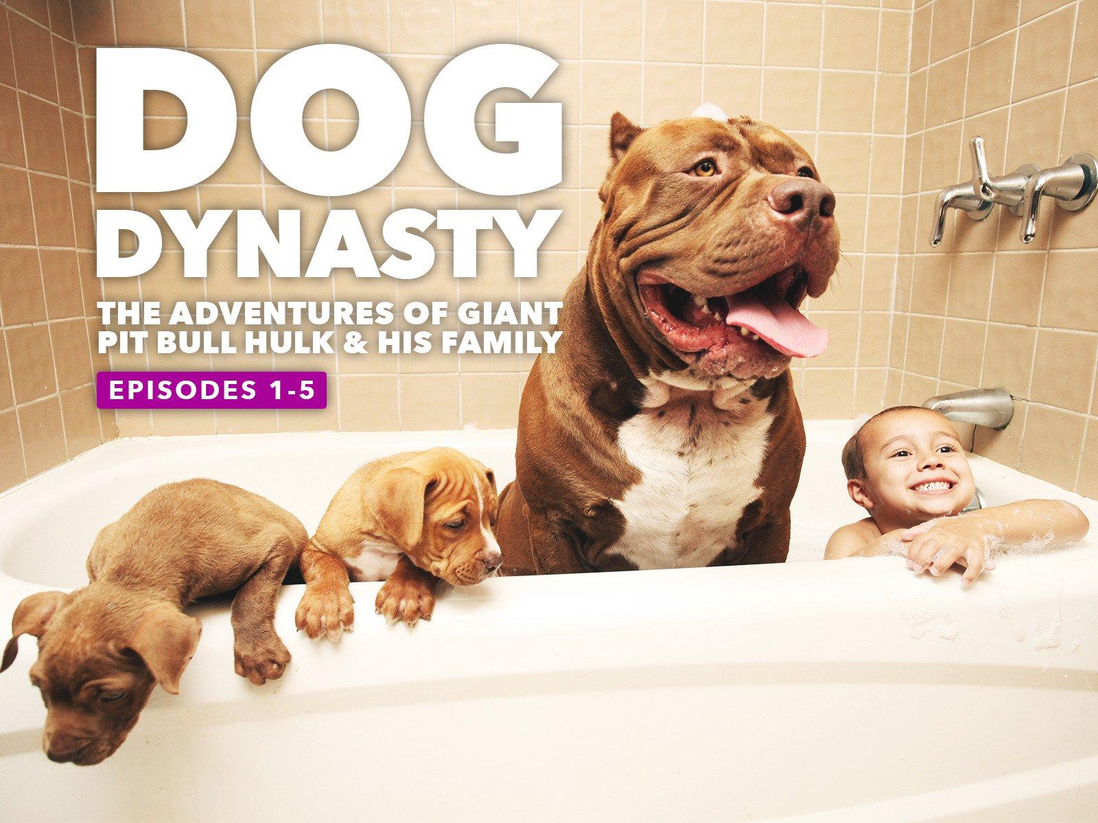 ebf8673ca78 Amazon.com  Watch Dog Dynasty