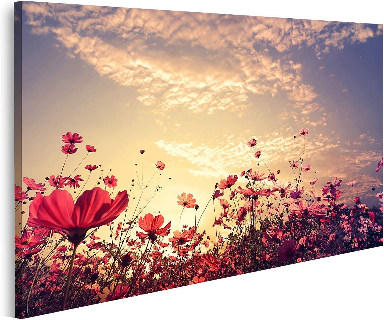 islandburner Cuadro en Lienzo Hermoso Campo de Flores Rosadas y Rojas del Cosmos con Sol Cuadros Modernos Decoracion Impresión Salon