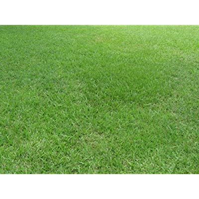 Nature's Seed Bahia Grass Seed Blend, 1000 sq. ft. : Garden & Outdoor