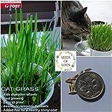 Portal Cool Paquete de Semillas: 500 Semillas: Semillas Cat Grass (Dactylis glomerata); beneficioso para Gatos