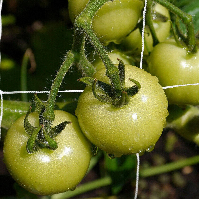 Leggera e Adatta per Qualsiasi Piante 15,2 cm Foro Quadrato Verdure Universale 150 mm Resistente Tech-Garden Rete di Supporto per Piante da Giardino arbusti o Fiori
