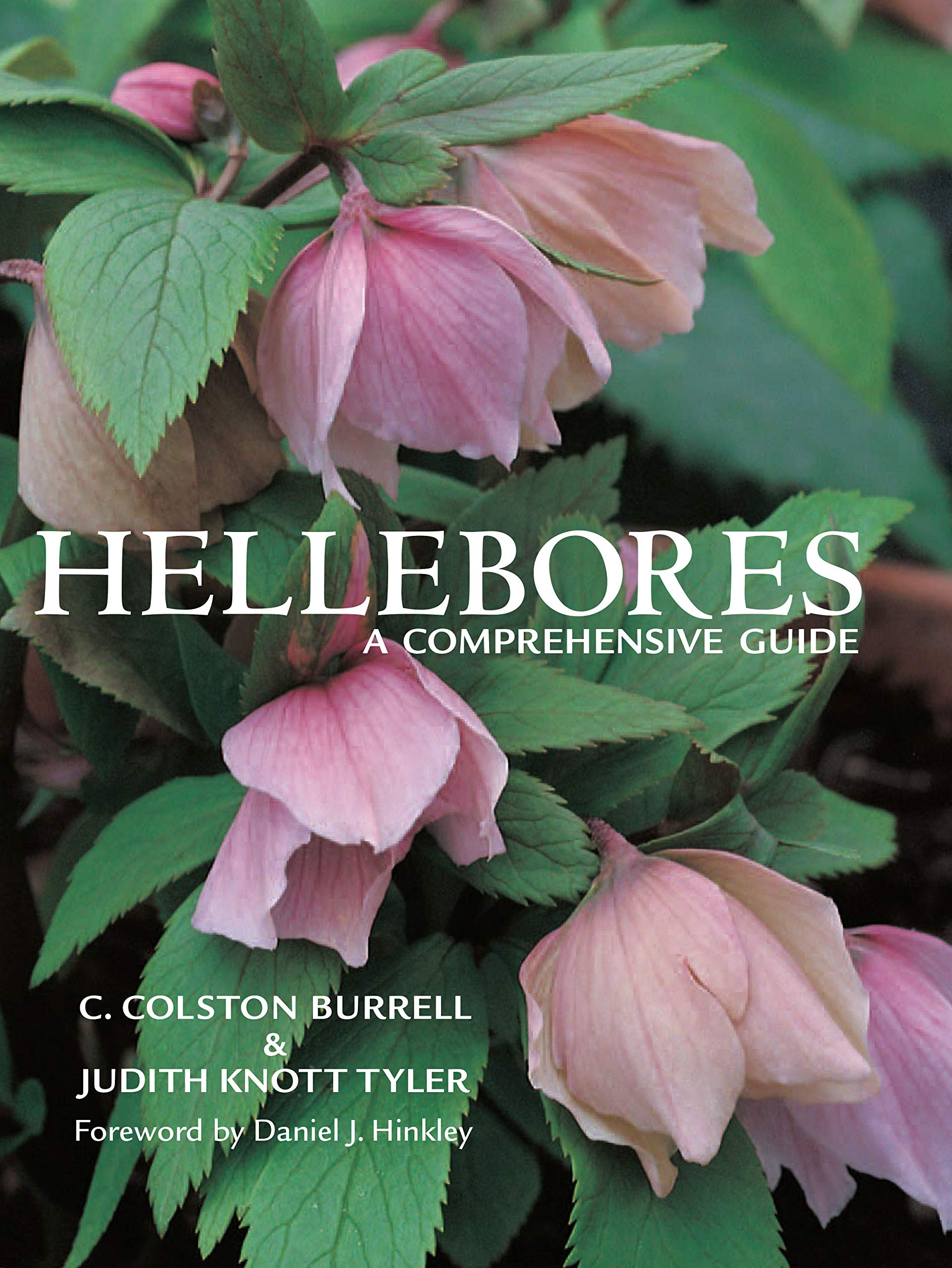Hellebores A Comprehensive Guide C Colston Burrell Judith