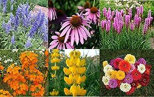 David's Garden Seeds Wildflower Bumblebee Buffet Mix SL7555 (Multi) 500 Non-GMO, Open Pollinated Seeds