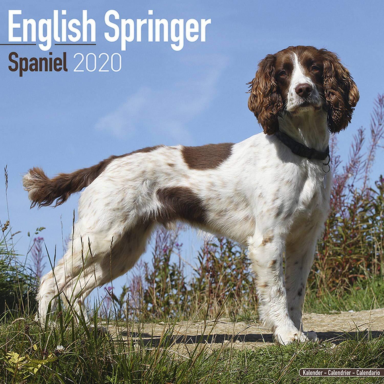 SPRINGER SPANIEL Calendrier 2019