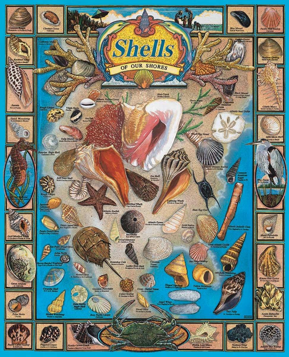 Puzzle 1000 Teile Muscheln unserer Küste wh164 von WeißMountain