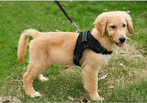 Arnés de perro collar salir a pasear seguridad diferentes tallas S ...