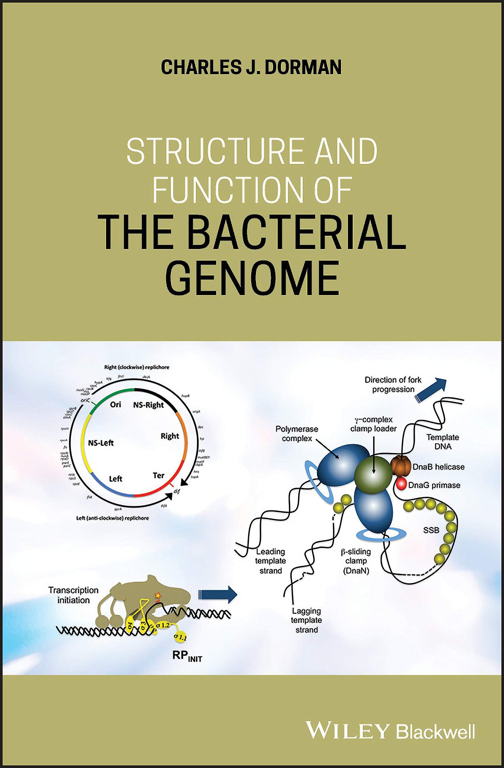 Structure and Function of the Bacterial Genome: Amazon.es ...