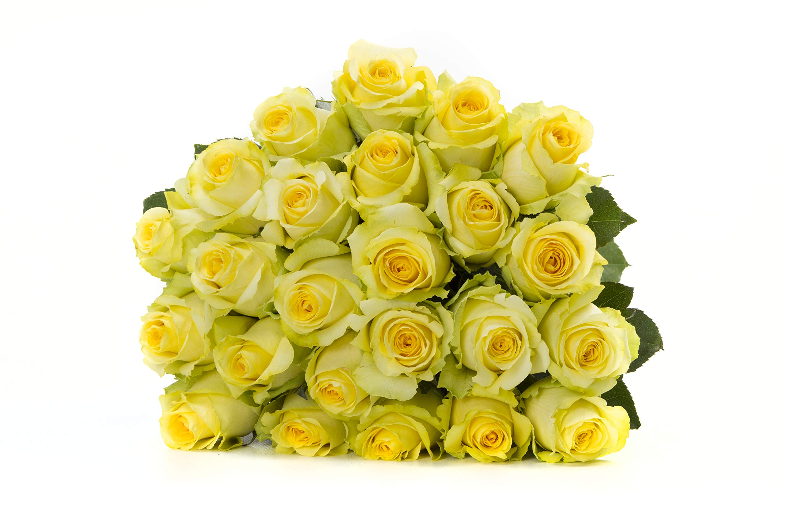 Martha Stewart Roses by BloomsyBox - Two Dozen Yellow Tara Roses Selected by Martha and Hand-Tied, Long Vase Life