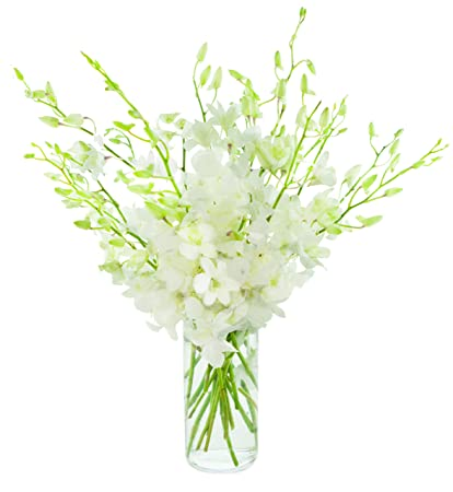 Amazon Kabloom Exotic Perla White Orchid Bouquet Of 20 Fresh
