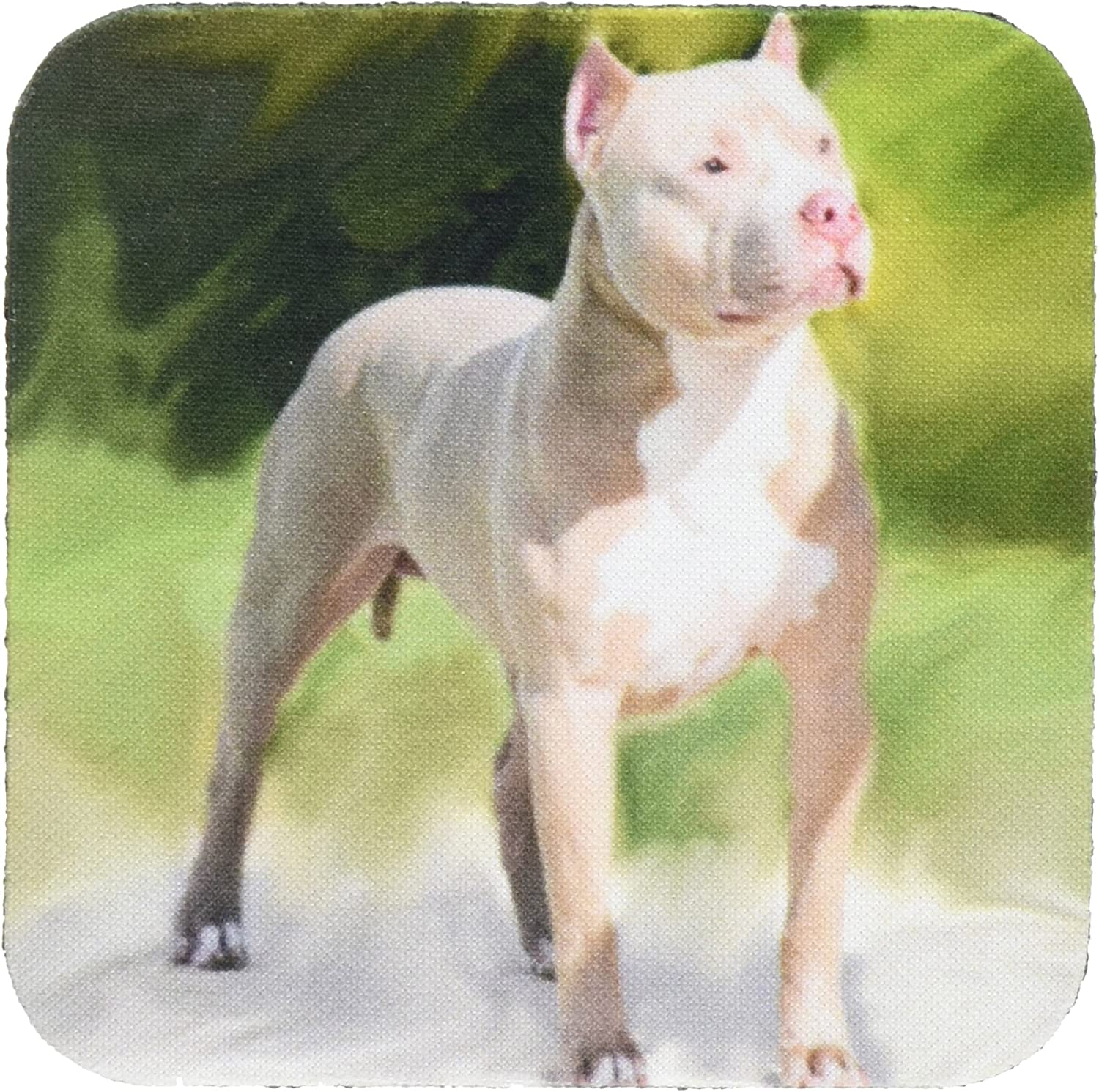 3dRose CST_4241_2 American Pit Bull Terrier Soft Coasters, Set of 8