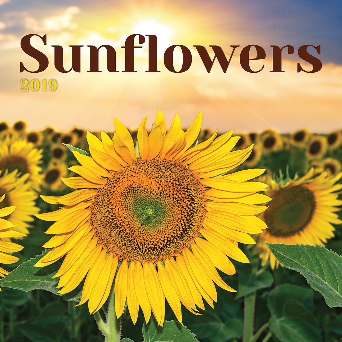 Turner Photo Sunflowers 2019 Wall Calendar (199989400540 Office Wall Calendar (19998940054)