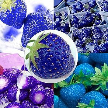 Keland Garten - Riesen Erdbeeren Obstsamen 50 Stück supersüß Extragroß wie Eier, Großfrüchtig aromatisch, geeignet für Ihr Garten, Balkon /(gelb/) geeignet für Ihr Garten