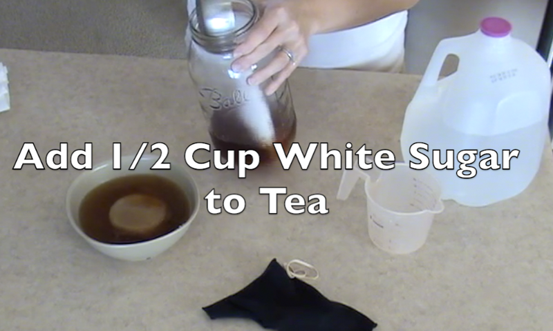 how to make kombucha tea video