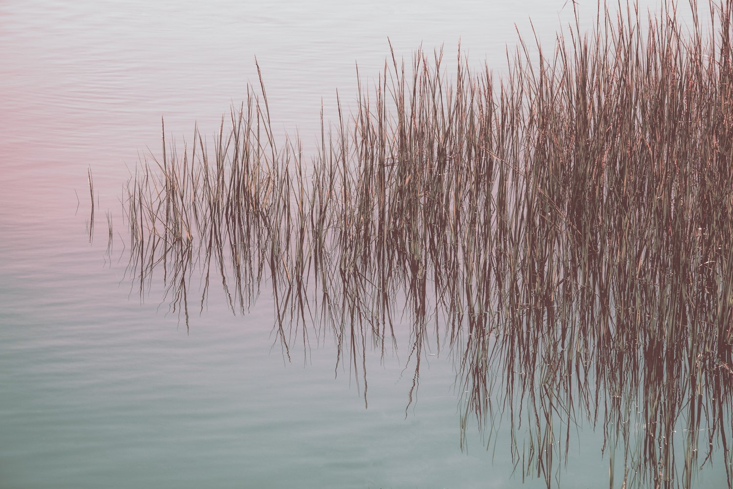 Marsh Grass - Reflection Pond - Photography Print - Abstract Fine Art - Nature - New England Photography - Sunset - Water - Home Decor
