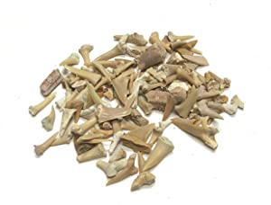 Zentron Crystal Collection Sand Shark Teeth Pack Fossils Real Natural (1/4 Pound)