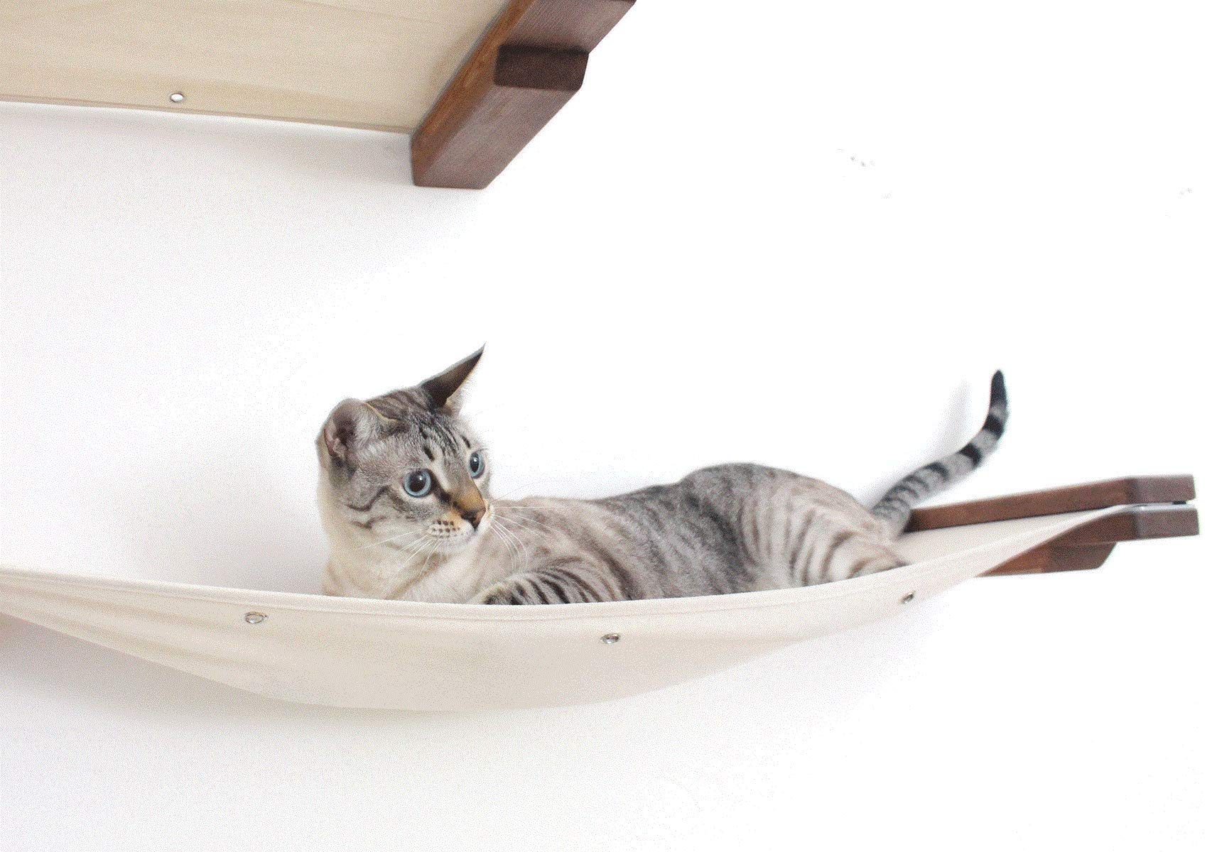CatastrophiCreations Cat Double Decker Wall Mounted Lounge and Play Furniture Cat Tree Shelves - Onyx/Natural, One Size 3