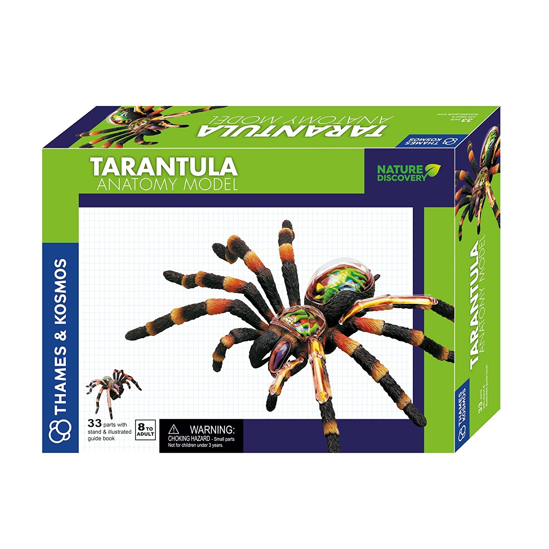 Thames and Kosmos 261120 Tarantula Anatomy Model Toy: Thames ...