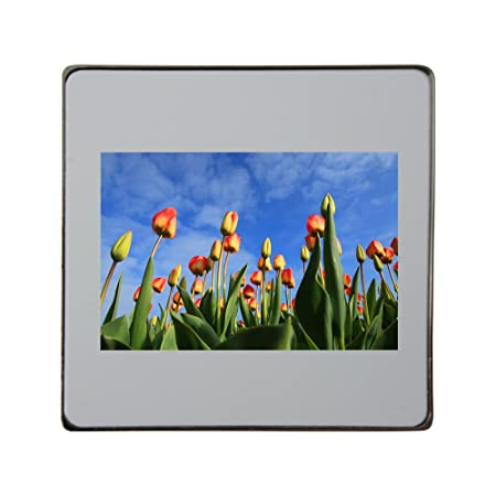 Tulipanes, tulipanes, campo, campos, rojo Metal cuadrado imán para ...
