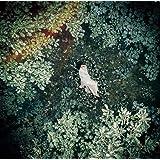 【Amazon.co.jp限定】スターライトキセキ/Ark (初回限定盤B)(DVD付)【特典:ステッカーシート付】