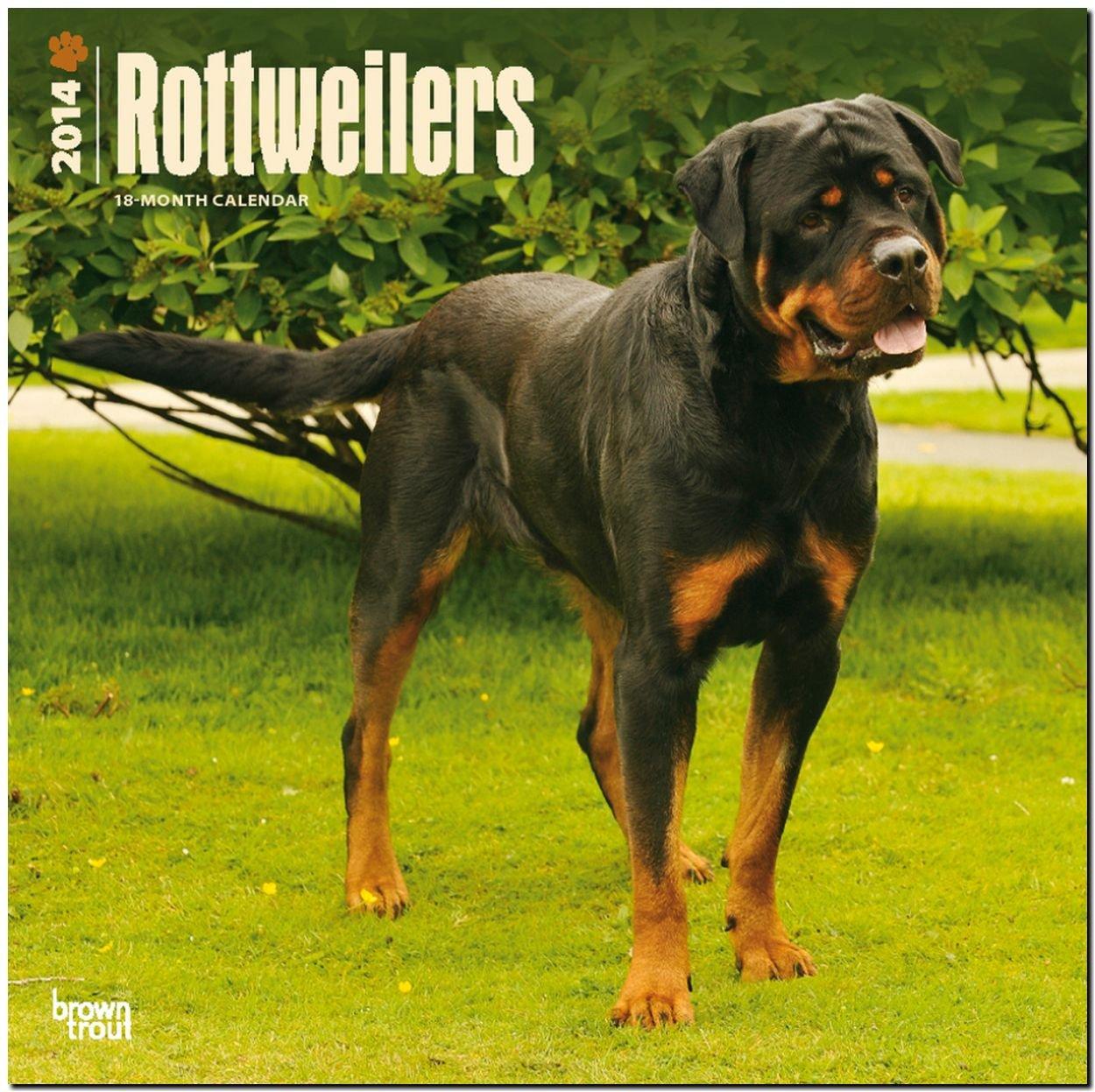 Rottweilers 2014 - Rottweiler: Original BrownTrout-Kalender [Mehrsprachig] [Kalender]