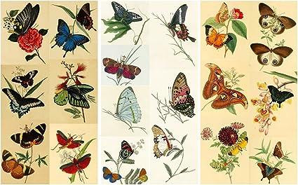 1  x Australian Animals Paper Napkin Scrapbooking Decoupage Card Collage Craft