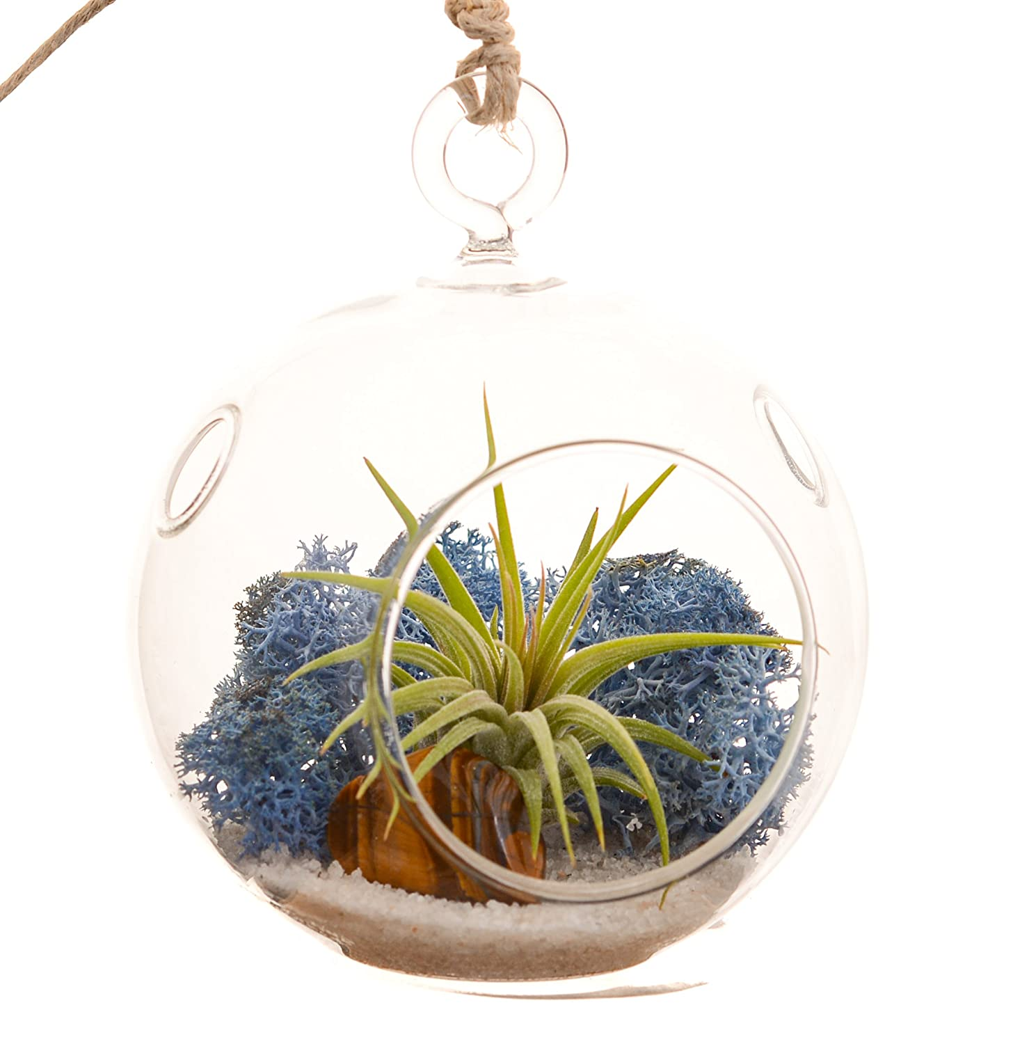 Bliss Gardens Mini Air Plant Terrarium Kit with 3 Round Glass Blue Moss Sand Tiger s Eye Stone