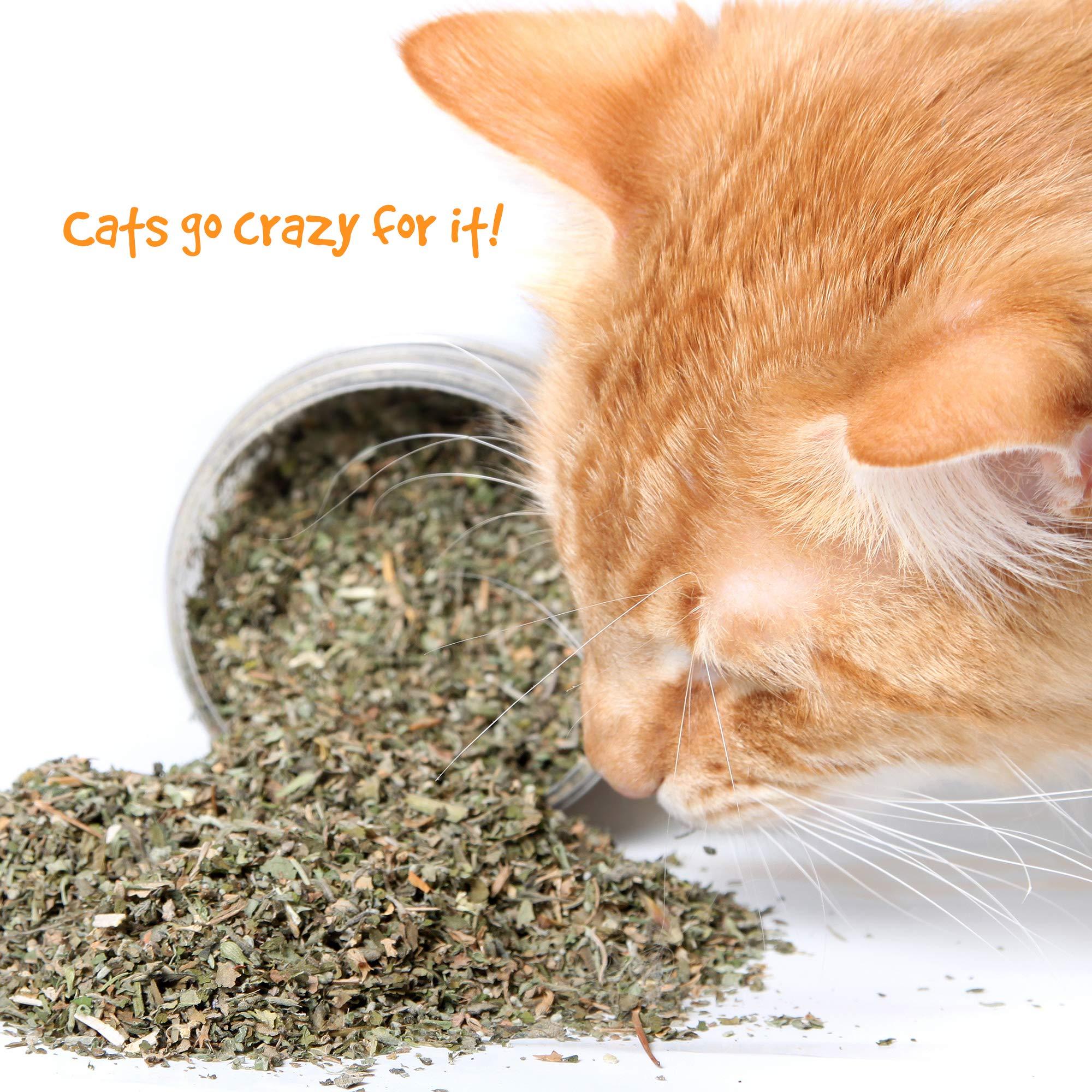 CatNip for cats, 81ERkETNfmL