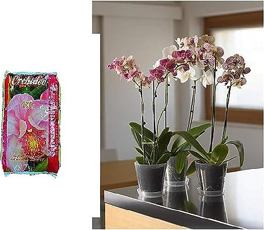 CASSETTA per fiori ORCHIEDEA H 29