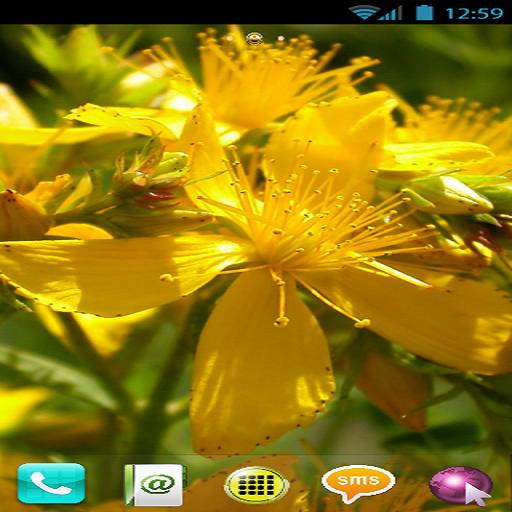 FLOWERS THEME (GO LAUNCHER) (Best Go Launcher Themes)
