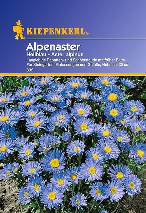 Sperli Blumensamen Alpenaster hellblau, grün