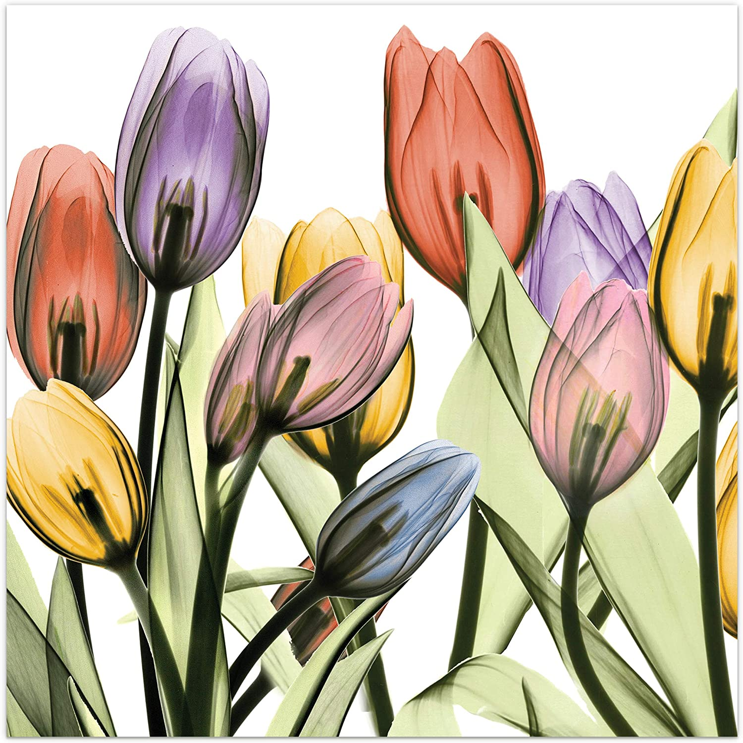 """Empire Art Direct Tulip Scape X-Ray I Flower Wall Art on Frameless Free Floating Tempered Glass Panel Ready to Hang, Living Room, Bedroom & Office, 24"""" x 24"""" x 0.2"""""""