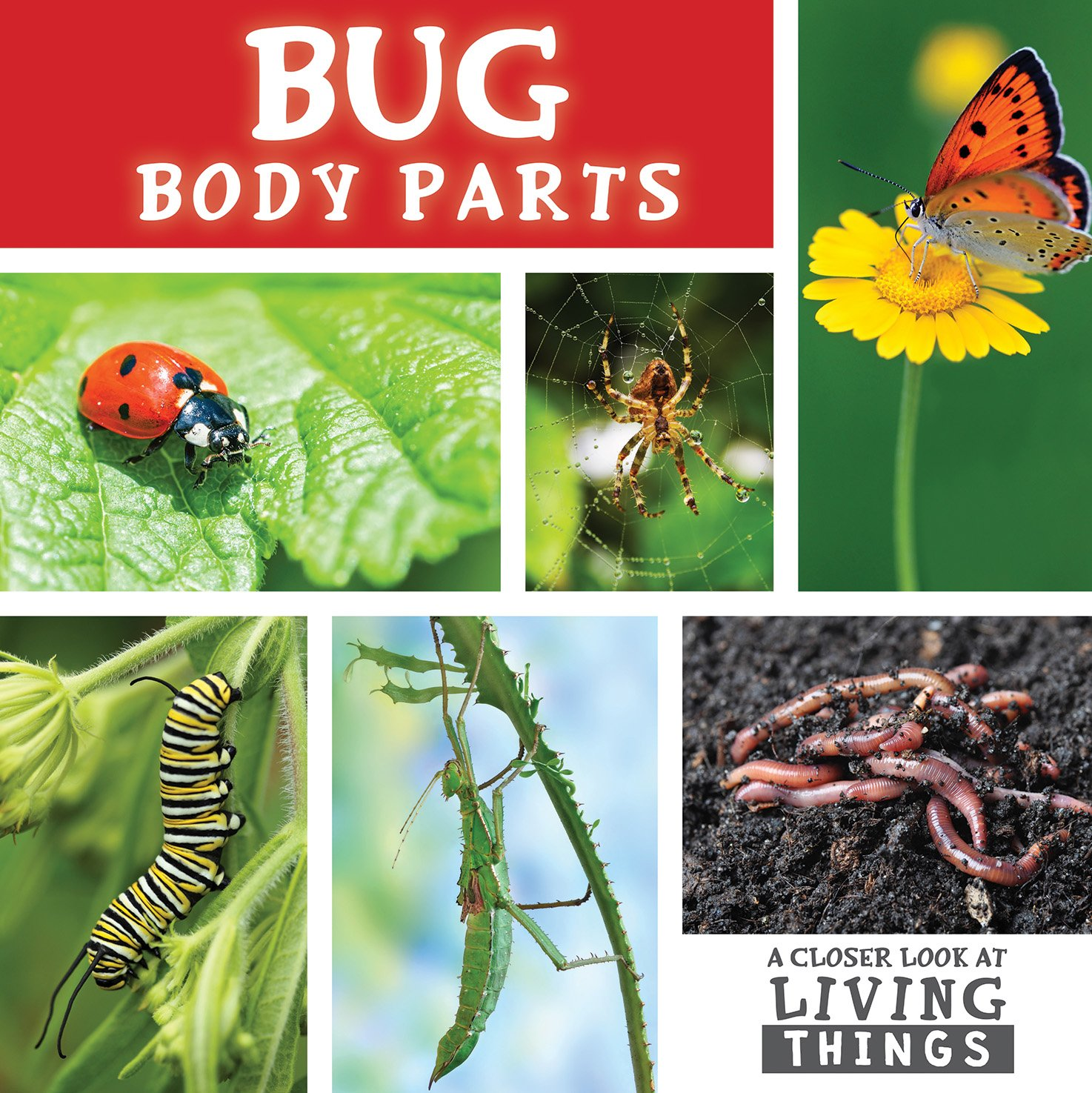 parts of living things